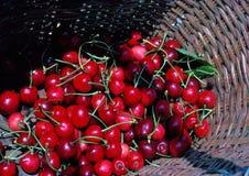Cerejas em uma cesta Fotos de Stock Royalty Free