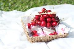 Cerejas em uma cesta com as flores na grama Foto de Stock Royalty Free