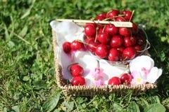 Cerejas em uma cesta com as flores na grama Fotos de Stock Royalty Free