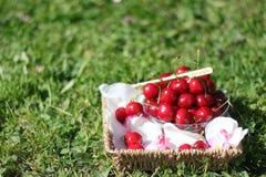 Cerejas em uma cesta com as flores na grama Imagens de Stock