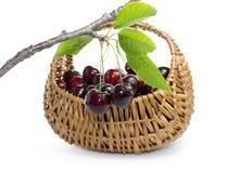 Cerejas em uma cesta de vime Fotografia de Stock