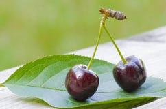 2 cerejas em uma folha Foto de Stock