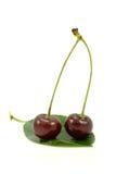 Cerejas em uma folha verde Imagem de Stock