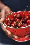 Cerejas frescas Fotos de Stock