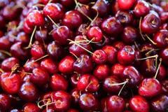 Cerejas frescas Fotografia de Stock Royalty Free
