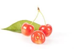 Cerejas frescas do juich Fotografia de Stock