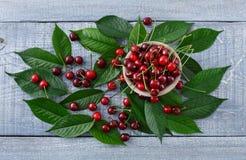 Cerejas frescas doces com as folhas verdes na madeira rústica azul Imagem de Stock Royalty Free
