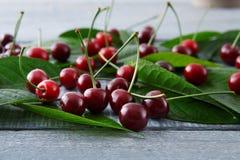 Cerejas frescas doces com as folhas verdes na madeira rústica azul Foto de Stock
