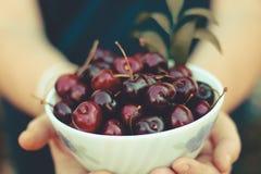 Cerejas frescas em uma bacia imagem de stock