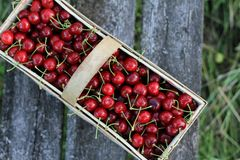 Cerejas frescas em uma cesta na grama foto de stock royalty free