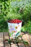 Cerejas frescas em uma cubeta colorida e cerejas maduras com as folhas exteriores Imagens de Stock Royalty Free