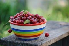 Cerejas frescas na placa da cor na tabela de madeira imagens de stock royalty free