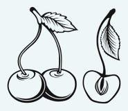 Cerejas maduras com folha Foto de Stock Royalty Free