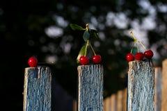 Cerejas maduras vermelhas imagens de stock