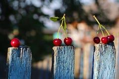 Cerejas maduras vermelhas imagem de stock royalty free