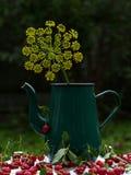 Cerejas maduras vermelhas foto de stock royalty free