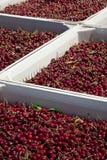 Cerejas maduras vermelhas nos escaninhos imagens de stock royalty free
