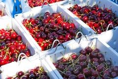 Cerejas recentemente escolhidas em umas caixas fotografia de stock royalty free