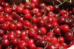 Cerejas vermelhas brilhantes Imagem de Stock Royalty Free