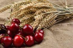 Cerejas vermelhas e saborosos frescas no fundo de jude, com grupo de w Fotos de Stock