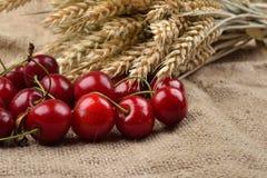Cerejas vermelhas e saborosos frescas no fundo de jude, com grupo de w Foto de Stock Royalty Free