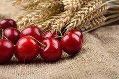 Cerejas vermelhas e saborosos frescas no fundo de jude, com grupo de w Foto de Stock