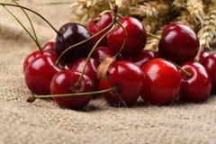 Cerejas vermelhas e saborosos frescas no fundo de jude, com grupo de w Fotografia de Stock Royalty Free
