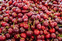 Cerejas vermelhas frescas fotos de stock