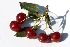 Cerejas vermelhas maduras com sombra Fotografia de Stock