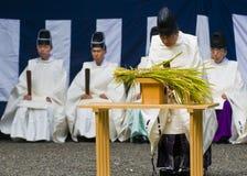 Ceremonia de la cosecha del arroz fotografía de archivo libre de regalías