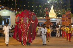 A ceremonial elephant dressed in a beautiful red cloak is led through the parade at the Kataragama Festival in Sri Lanka. Stock Photos