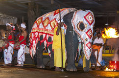 A ceremonial elephant parades down a street in Kandy during the Esala Perahera in Sri Lanka. Royalty Free Stock Photography