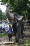 A ceremonial elephant poses for tourists at the Temple of the Sacred Tooth Relic comlex in Kandy, Sri Lanka. Stock Photography
