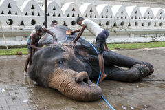 A ceremonial elephant at the Sacred Tooth Relic comlex in Kandy, Sri Lanka. Stock Photo