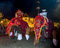 Ceremonial elephants pass the Temple of the Sacred Tooth Relic in Kandy, Sri Lanka during the Esala Perahera. Royalty Free Stock Photography