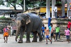 Ceremonialny słoń, towarzyszący swój mahout, rusza się przez świątyni Święta ząb relikwia w Kandy, Sri Lanka zdjęcie royalty free