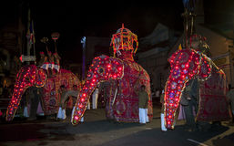 Ceremoniella elefanter ståtar till och med gatorna av Kandy under Esalaen Perahera i Sri Lanka arkivfoton