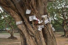 Ceremoniellt träd med kopior av registreringsskyltar Royaltyfria Foton
