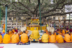 Ceremony under the bodhi tree Stock Photography