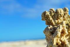 Ceres06 -海滩 免版税图库摄影