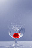 Cereza 4 Imagen de archivo libre de regalías