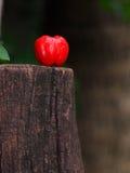 Cereza casera orgánica fresca roja natural de la planta en una vieja superficie de madera mojada bajo luz del sol natural Fotografía de archivo libre de regalías