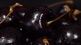 Cereza Cerezas maduras que giran sobre fondo negro Cereza dulce madura negra giratoria Vídeo de la rotación 4K UHD inconsútil almacen de metraje de vídeo