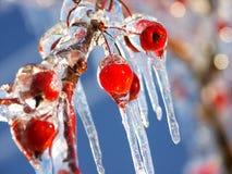 Cereza congelada Foto de archivo
