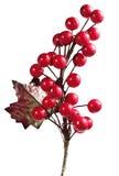 Cereza de la Navidad Foto de archivo