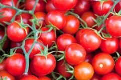 Cereza del tomate Fotos de archivo libres de regalías