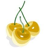 Cereza dulce amarilla aislada en blanco Imagenes de archivo