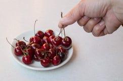 Cereza dulce en la mano y en una placa blanca, foco selectivo en las bayas Foto de archivo libre de regalías