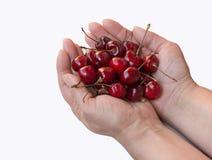 Cereza dulce en las manos femeninas aisladas en el fondo blanco Imagen de archivo