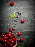 Cereza en la herramienta de la taza y del metal para las cerezas Imagenes de archivo